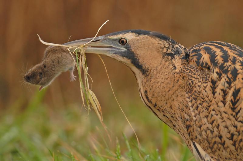 bijzondere lezing vogelfotografie  1