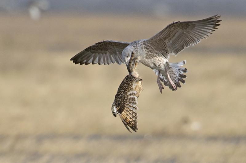 bijzondere lezing vogelfotografie  10