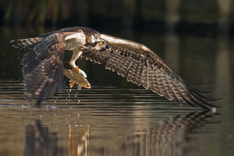 bijzondere lezing vogelfotografie  2