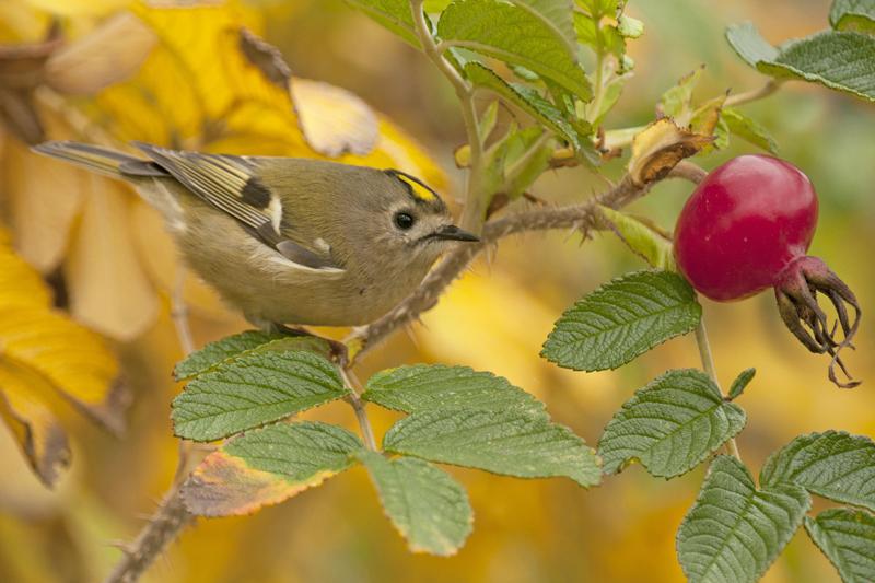 bijzondere lezing vogelfotografie  5