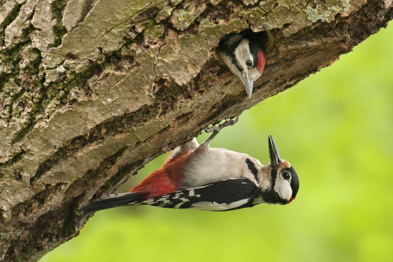 bijzondere lezing vogelfotografie  6