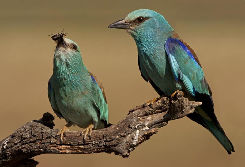 lezing vogelfotografie natuur spanje 1