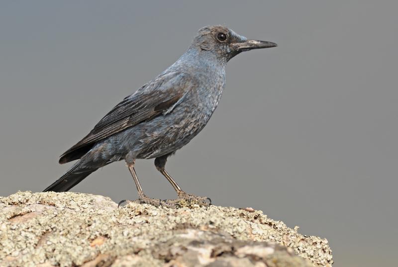 lezing vogelfotografie natuur spanje 7
