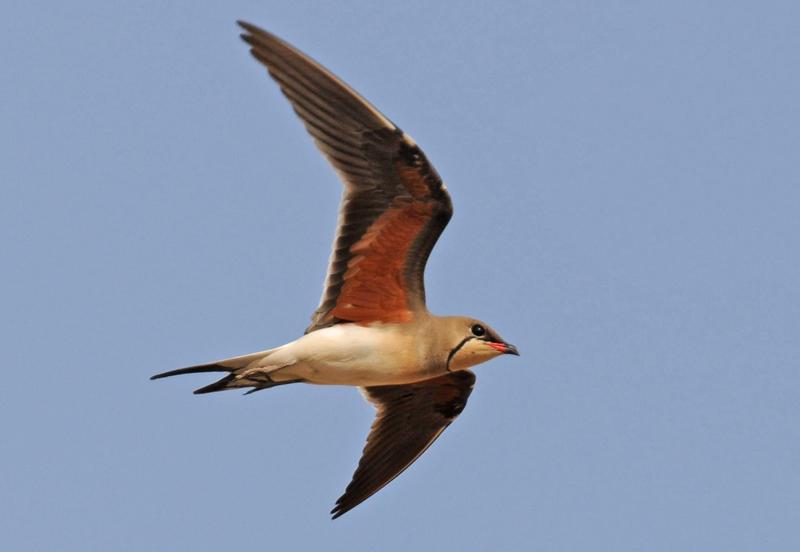 lezing vogelfotografie natuur spanje 9