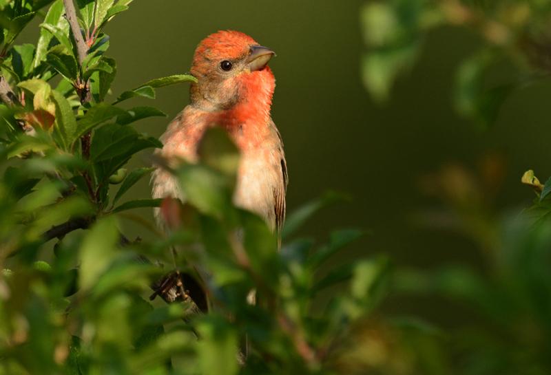 lezing vogelfotografie polen 1