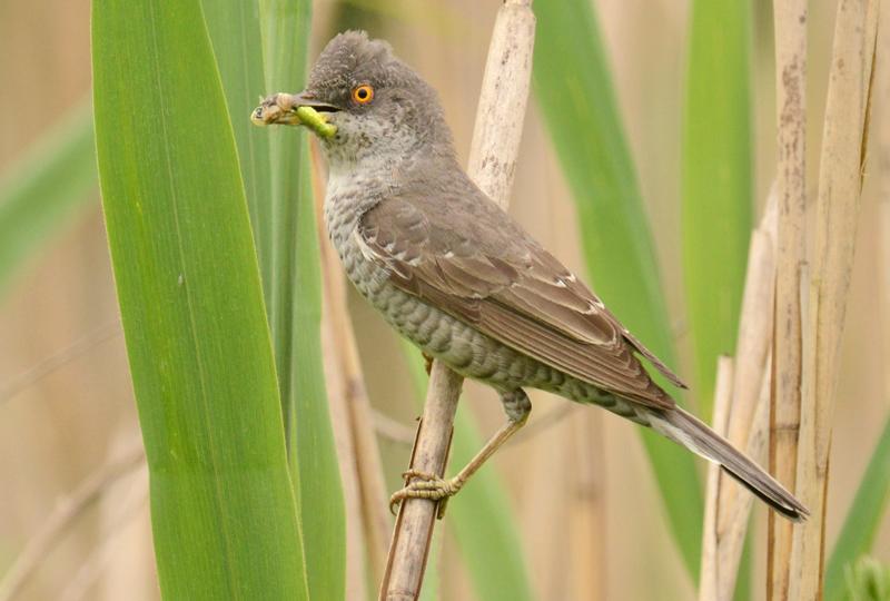 lezing vogelfotografie polen 5
