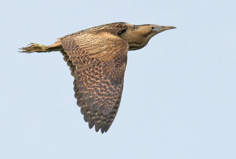 lezing vogelfotografie polen 6