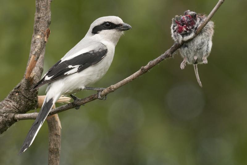 lezing vogelfotografie polen 7
