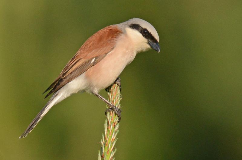 lezing vogelfotografie polen 8